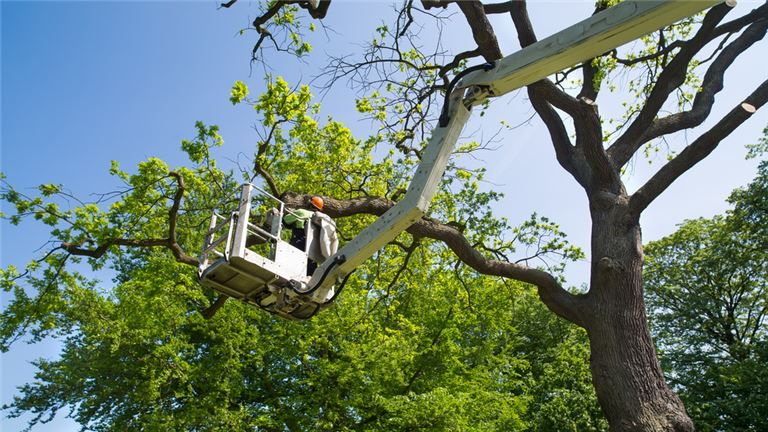 TREE-TRIMMING-AND-TREE-REMOVAL.jpg